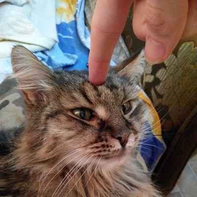 #cat #cats #catsagram #catsofinstagram #instacats #instagramcats #mycat #katz #katzen #caturday #catoftheday #2014 Cat Cats Katzen Caturday Mycat Catsofinstagram Instagramcats Catsagram Catoftheday 2014 Instacats Katz
