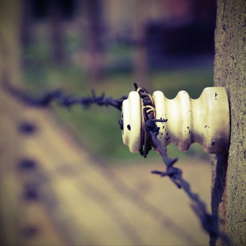 detail of the border with barbed wire with vintage effect Auschwitz  Barbed Wire Birkenau Frontier Refugee Camp Barbed Barbedwire Barrier Close-up Concept Electric Fence Electrified Fence Limit Metal Migrant Migrants Prison Refugees Rusty Safety Segregation
