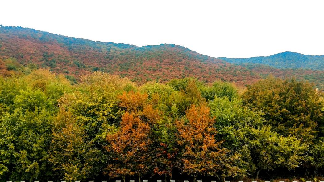 Nature Landscape Beauty In Nature Outdoors Tree No People Scenics Mountain Growth Day Rural Scene Sky Colors Sprig Lost In The Landscape