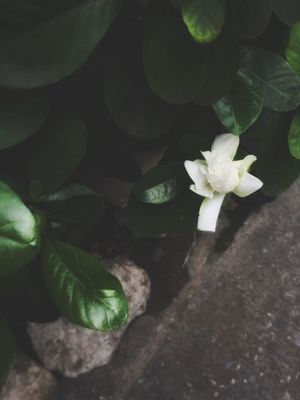 somethings calling sweet mornings Sweetmorning Nature Photography White Flower Flower Leaf Plant Growth Nature Petal Beauty In Nature Fragility Freshness Green Color Flower Head Day