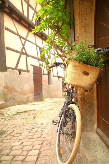 Bicycle Architecture No People City Lovephotography  Travel Destinations Apprendre à Observer Eguisheim A Vélo Petite Rue Tourisme Moment Photography Sunlight Canonphotography Tranquil Scene Alsace