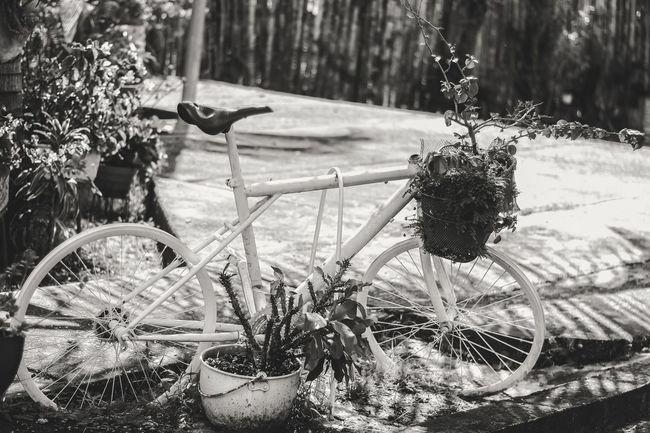 Black And White Friday Bike Plant Grass Monochrome Bicycle Nature Art Black And White Friday