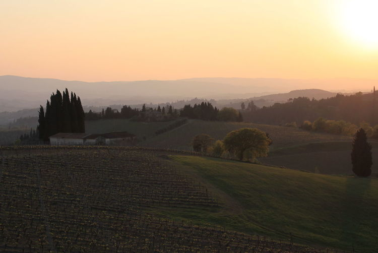 Landscape Nature No People Outdoors Sunset Toscana Toscany Tranquil Scene Wineyard Wineyards In Spring
