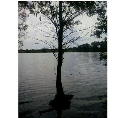 вода озеро Ставок СухоеДерево