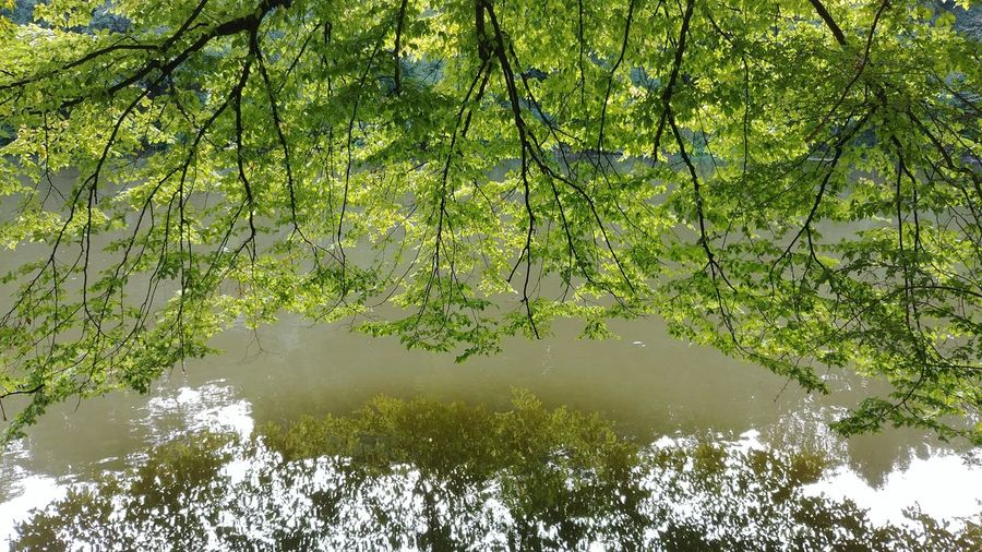 Reflection Water Tree Nature Green Color Outdoors Branch Standing Water Day No People Growth Full Frame Beauty In Nature Plant Leaf River