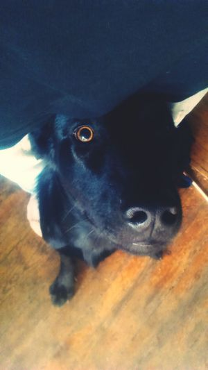 Notes From The Underground Pets One Animal Dog Close-up . Finally back. With a new membrr Vald