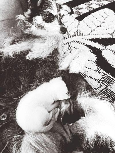 Meu gato mamando na minha cachorra ^^ Cat♡ Dog Love Amamentação ???