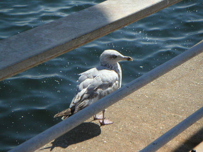 Bird Photography Geländer Möwe Schatten Sea Shadow Shadows & Lights Sonne Sonnenschein  Vogel Wasser Water Weiss
