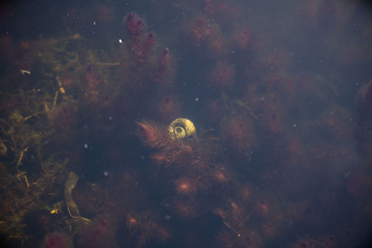 Dark Water Darkness Aquatic Plants Beauty In Nature Close-up Nature No People Outdoors Sea Life Shell Snail🐌 UnderSea Underwater Water