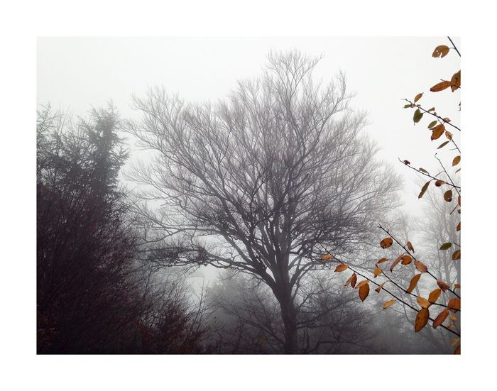 Pays des brumes Fog Tree Plant Sky Nature No People Day Growth Beauty In Nature Branch Low Angle View Winter Leaf