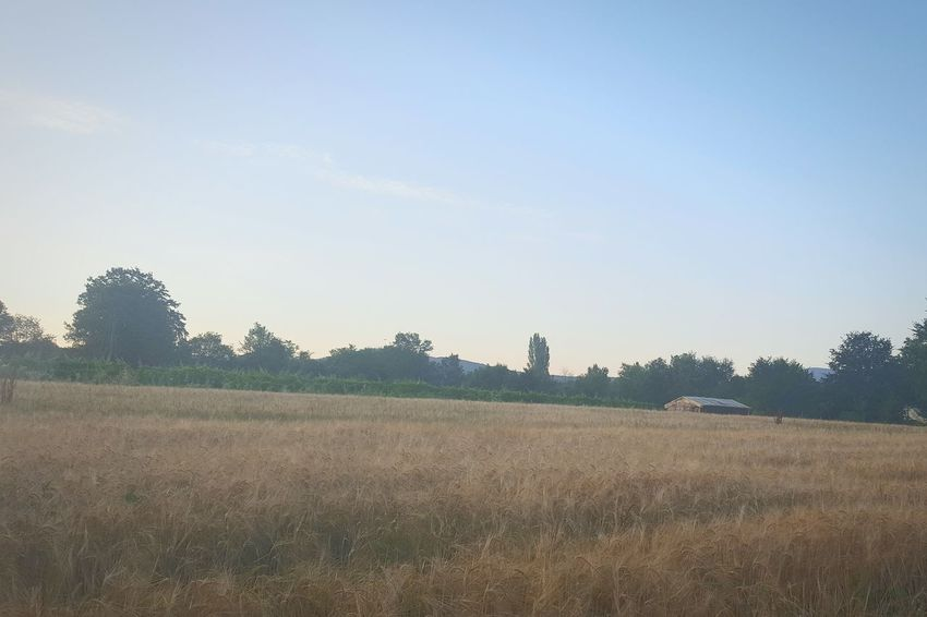 Golden Hour Morning Field House Cottage Outdoor Outdoors Photography No People