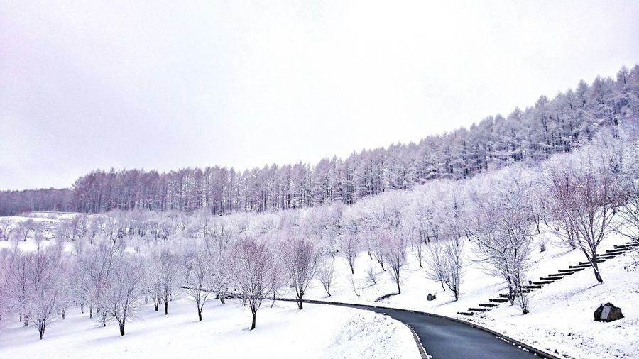 早く桜が咲くといいな🌸 Winter Cold Temperature Chica's Photo Trees Nature Snow Scenics Landscape Beauty In Nature Treelined Tree Area Naturelandscape Cloud - Sky Trees And Nature Tree And Snow Rural Scene 北海道 木 自然 Snowlandscape Landscape Photography Hokkaido Snowing Nature Chica's Winter Black_chica1704