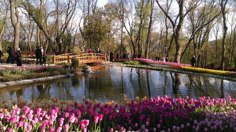 Tulips At The Park Sunny Day Emirgan Park