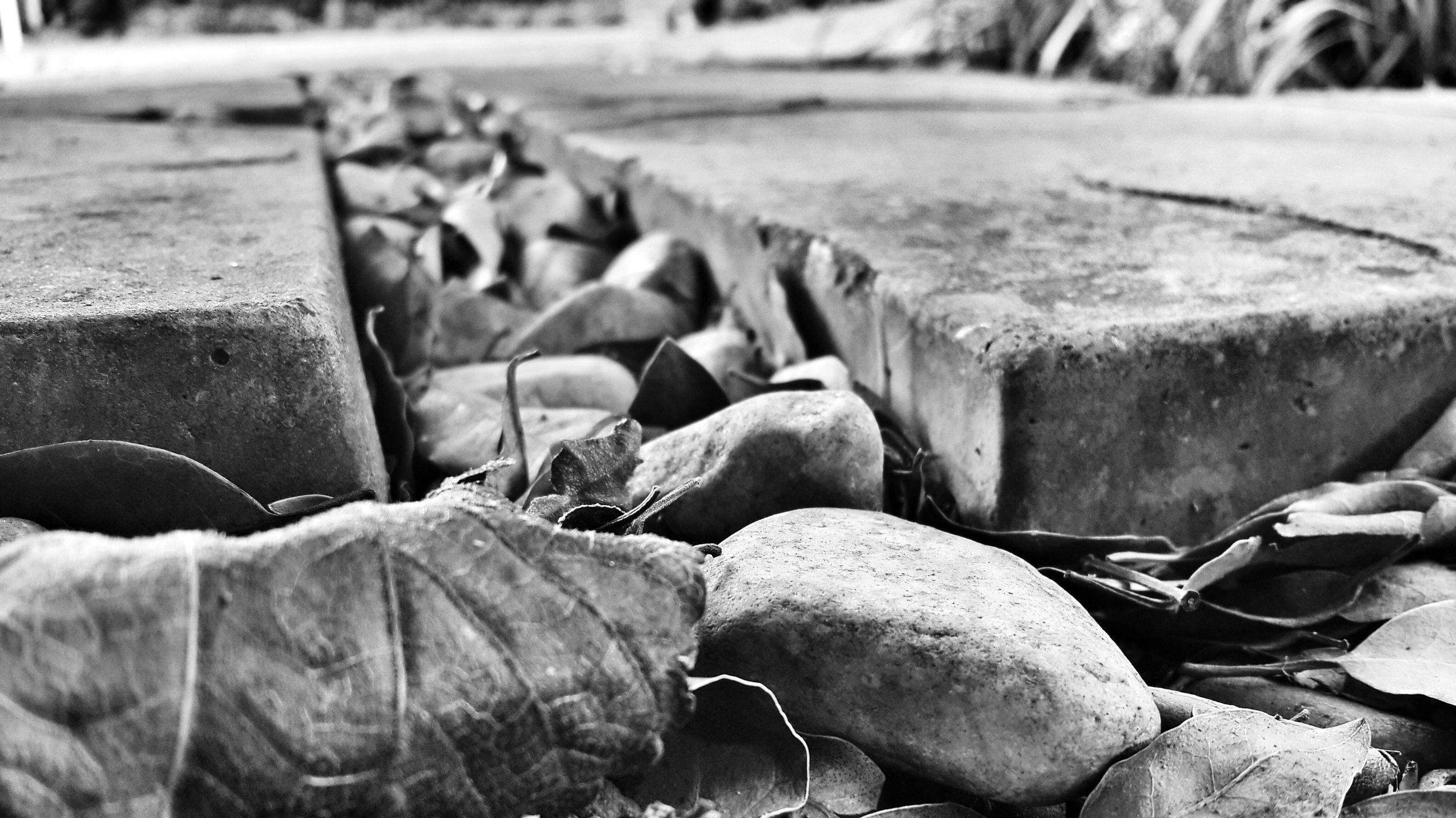 focus on foreground, field, day, close-up, outdoors, wood - material, selective focus, stack, stone - object, high angle view, nature, large group of objects, leaf, dry, dirt, grass, log, abundance, sunlight, textured
