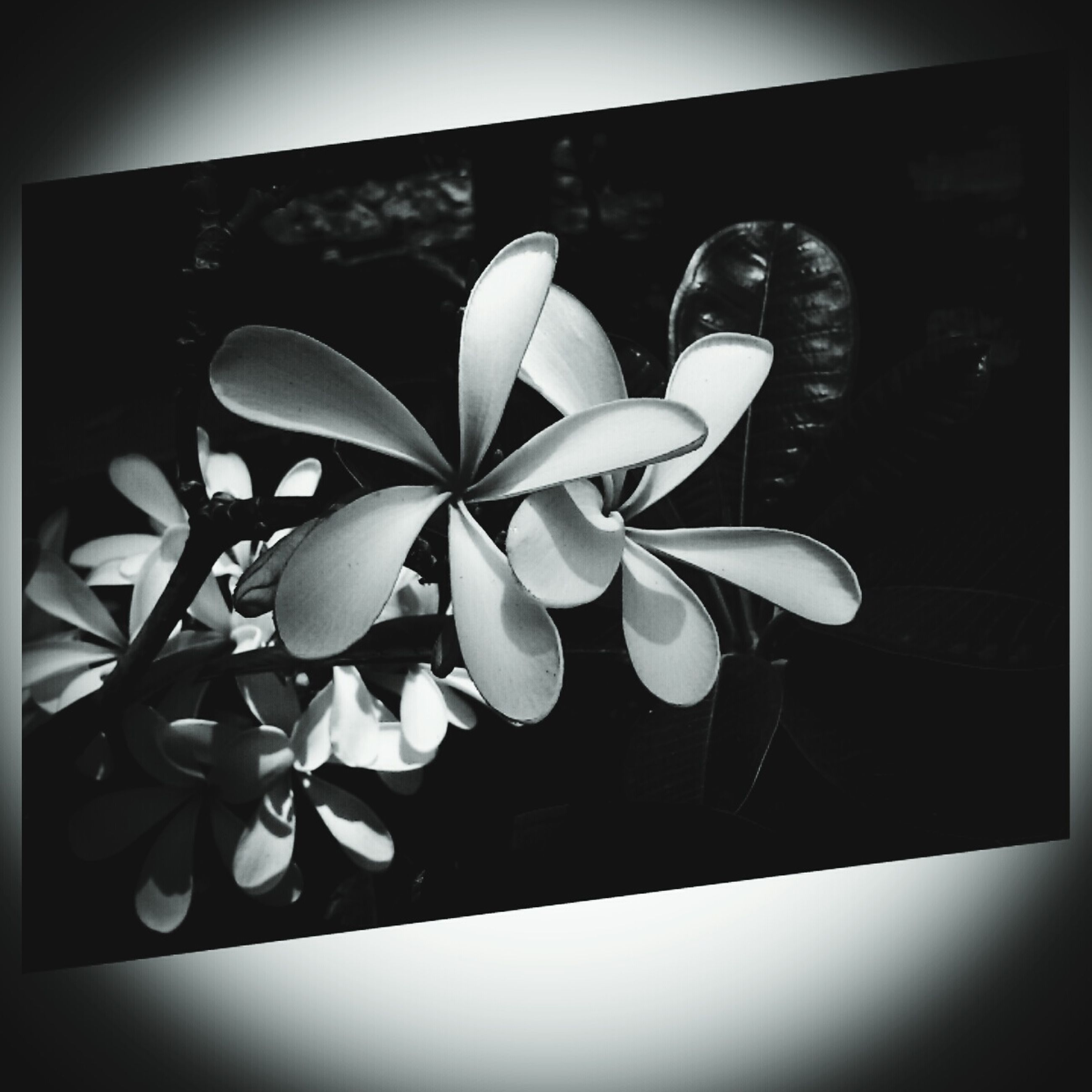 transfer print, flower, auto post production filter, indoors, petal, fragility, close-up, plant, potted plant, growth, freshness, flower head, nature, window, vase, sunlight, no people, day, leaf, beauty in nature