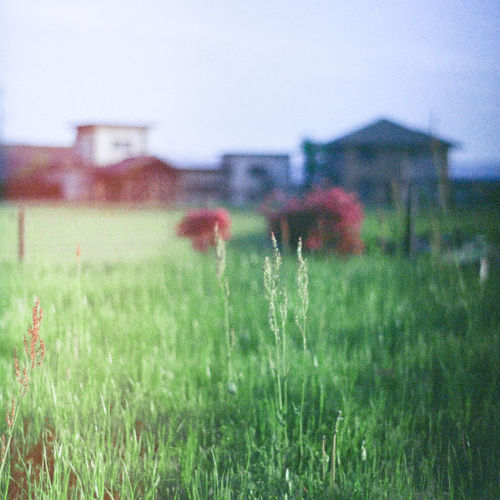Close-up of grass on field against buildings