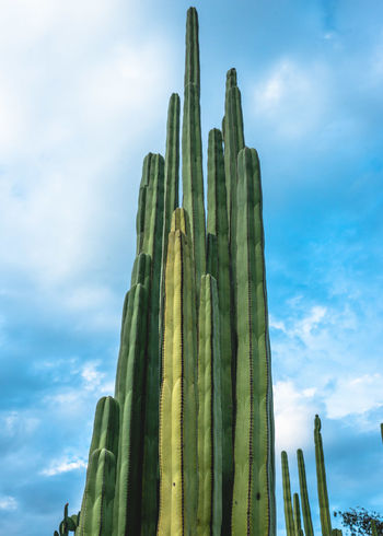 Blue Botanical Gardens Cactus Cactus Flower Cactus Garden Cloud Cloud - Sky Cloudy Day Garden Growth In A Row Low Angle View Nature Nature Nature Photography Nature_collection No People Oaxaca Outdoors Repetition Sky Travel Travel Destinations Travel Photography