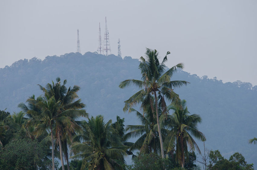 Close up of Bukit Mertajam hill with telecommunication tower. Architecture Beauty In Nature Day Growth Landscape Mengkuang Mountain Nature No People Outdoors Palm Tree Scenics Sky Tall Travel Destinations Tree