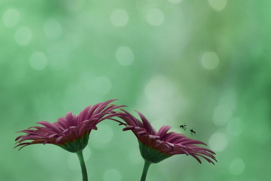 ...bE.. witH.. somEonE.. wHo.. iS.. pRouD.. tO.. havE.. yOu.. anD.. LovE.. tO.. sHow..iT.. Flower Freshness Fragility Nature Expression Bokeh Red Togetherness Macro Nature Flower Head Tranquil Scene Close-up Silence Of The Soul Colorful Outdoor Softness Kerala