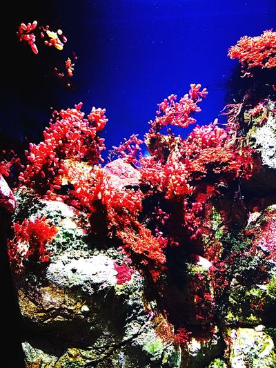 Deceptively Simple Corals in Oceanario Lisboa Portugal Sea Life part of Food Chain