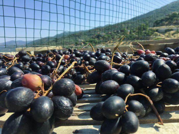 Black grapes in