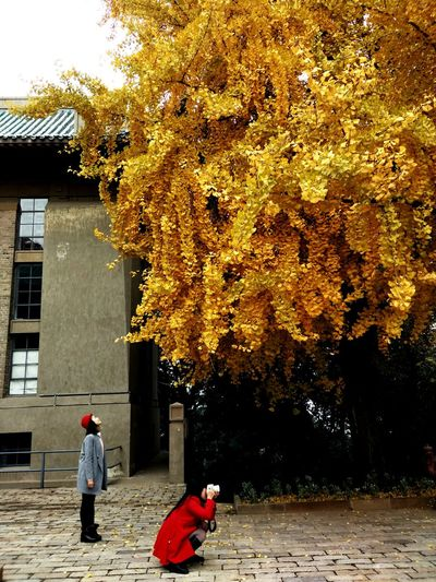 Candid Shot Ginkgo Leaf Redhat Redcoat Girls Cellphone Photography Take A Photo Accidental Shot