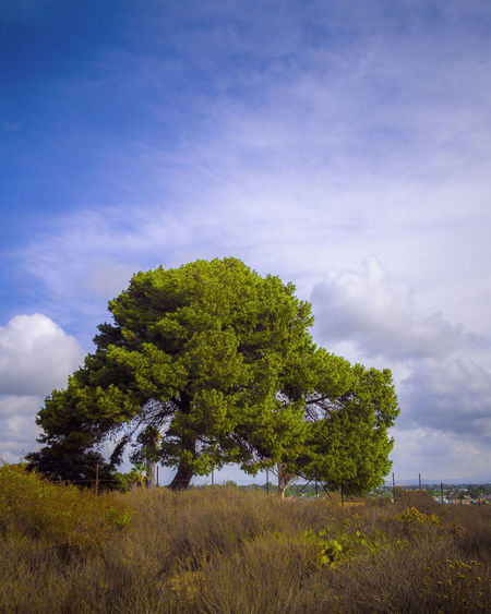 Big Tree Beauty In Nature Cloud - Sky Day Field Grass Growth Happy Place Happy Place♥ Landscape Nature No People Outdoors Scenics Sky Tranquil Scene Tranquility Tree