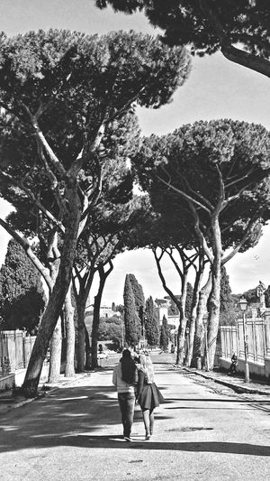 Roma Black & White Circomassimo Trees