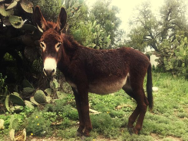 Donkey Pretty♡ Animals