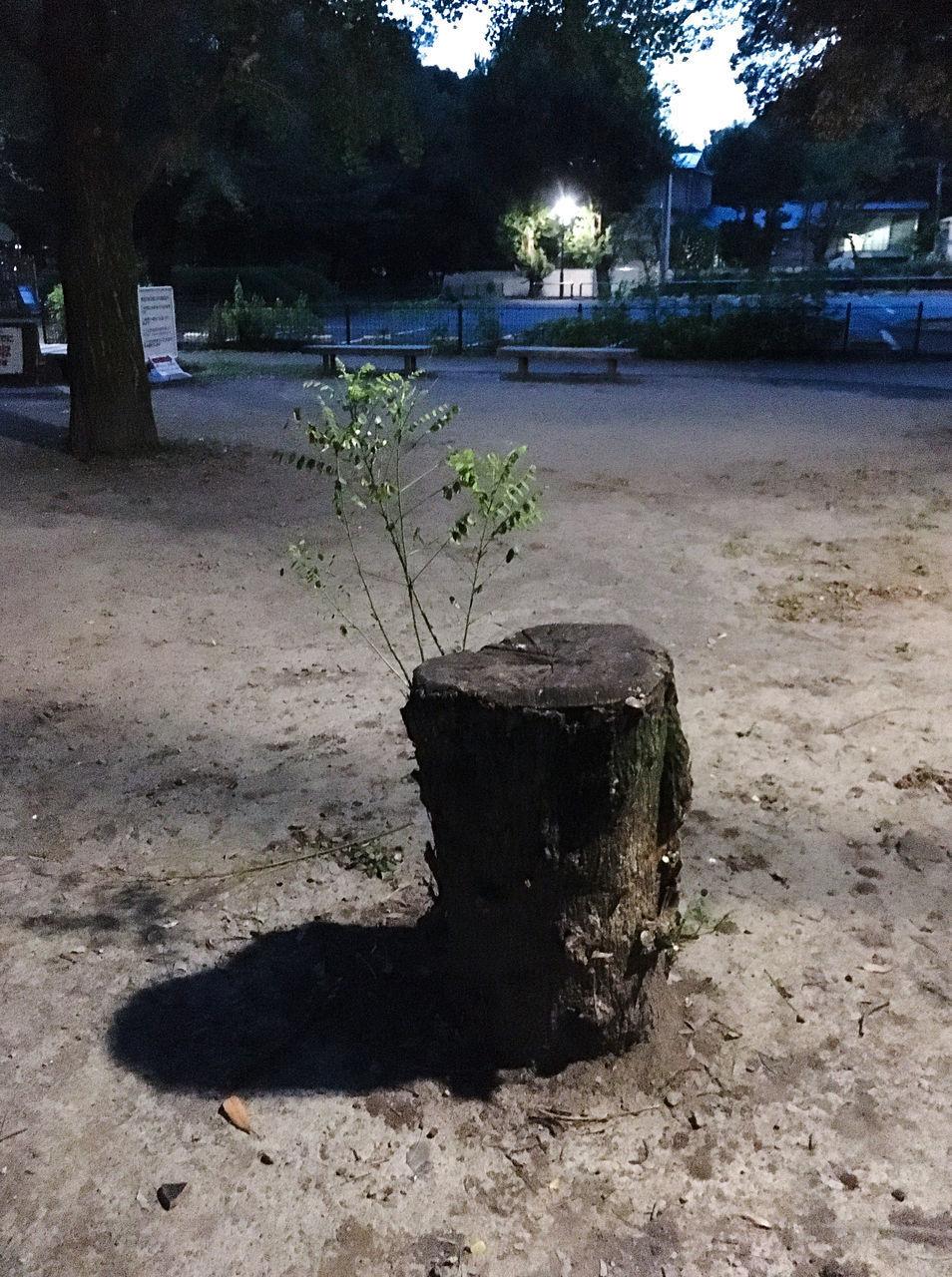 TREE TRUNK ON FIELD BY CITY