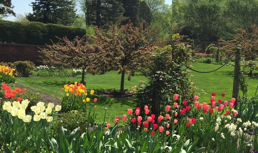 Gardens Tranquil Scene Flowerbeds Trees Beauty In Nature Trees Multi Colored Outdoors Grass Sky Fragility No People