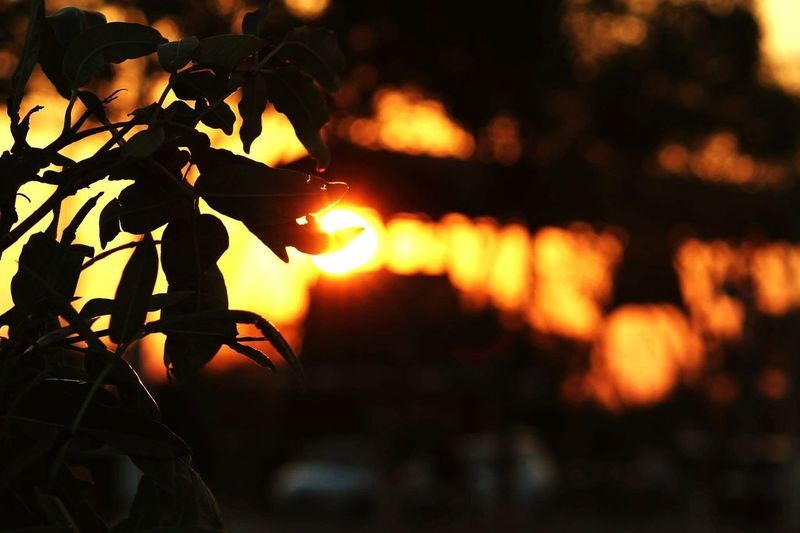 Sunset Nature Silhouette Night Beauty In Nature No People Leaf Tree Outdoors Tree Trunk Scenics Tree Area Branch Close-up Sky First Eyeem Photo