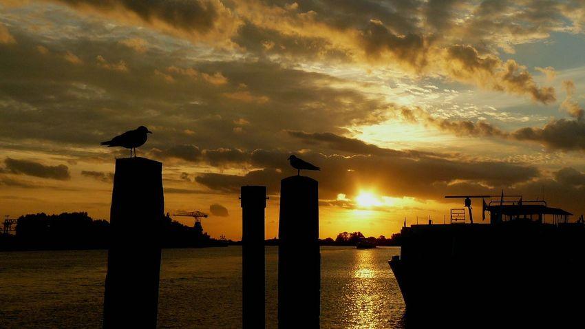 Water City Oil Pump Sunset Silhouette Sky Architecture Building Exterior Built Structure Cloud - Sky