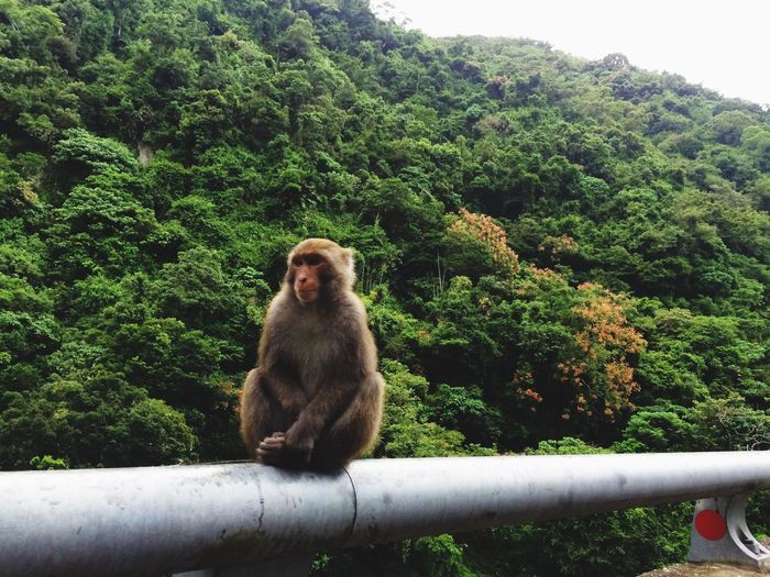 EyeEm Selects Mammal Monkey Nature Outdoors Jungle Road Animals In The Wild Green Color Sitting