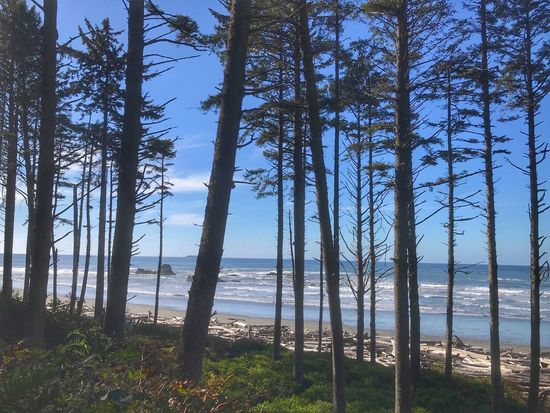 Thin trees in front of Ruby beach in Olympic national Park Tree Nature Forest Tree Trunk Tranquil Scene Scenics Sea Pinaceae Sunlight Blue Outdoors Day Pine Tree Water Landscape Beach Tranquility Horizon Over Water Beauty In Nature No People