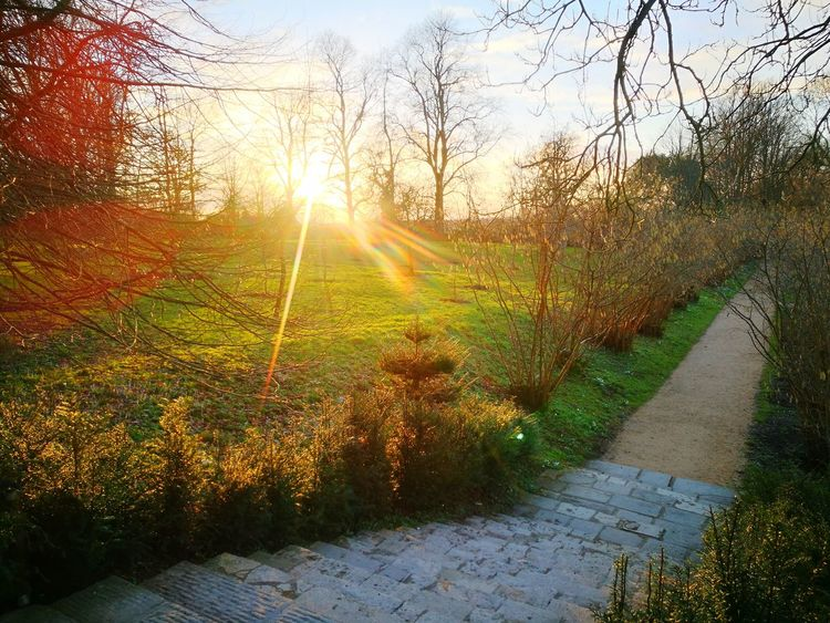 Sunset Sunset Through The Trees Stone Steps Penant Stone Steps Mud Stone Steps Garden Design Public Garden Early Spring Formal Garden Quality Landscaping Growth Tree Nature Sunlight Sunset Sun Agriculture Beauty In Nature Scenics No People Outdoors Sky Tranquility Rural Scene Day Freshness