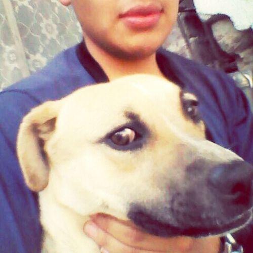 el se llama canelo mi perro y hoy esta conmigo jugando, lo adopte de la calle y ahora lo cuido.