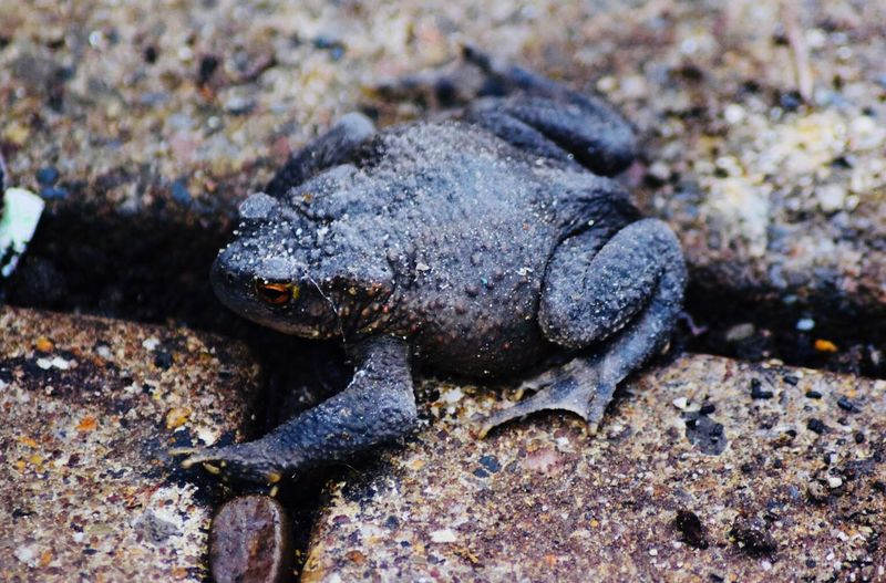 Nature Toad