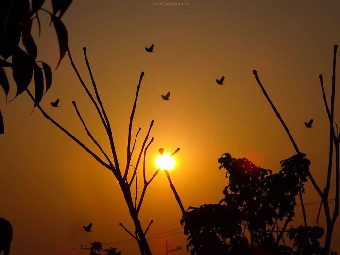 Silhouette Sun Nature Beauty In Nature Tree Outdoors Sky No People Branch Sunrise Birds Daily Life Beauty In Nature Landscape Sony Full Frame SonyHX400V Day Nature Tree Freshness Silhouette