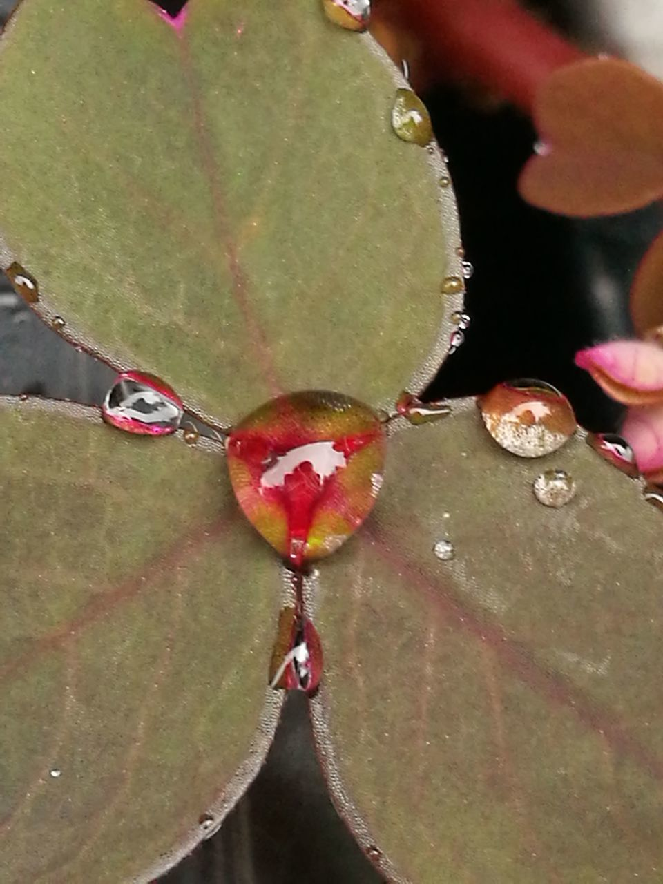 leaf, outdoors, nature, close-up, water, day, growth, beauty in nature, autumn, red, change, no people, plant, maple, freshness
