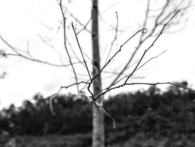 Come with me... (December, 2016) Tree Nature Branch Bare Tree Outdoors Close-up No People Beauty In Nature EyeEmBestPics EyeEm Best Shots Black & White Photography Blackandwhitephoto Bandung, West Java INDONESIA