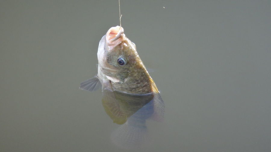 Close-up of catch in water
