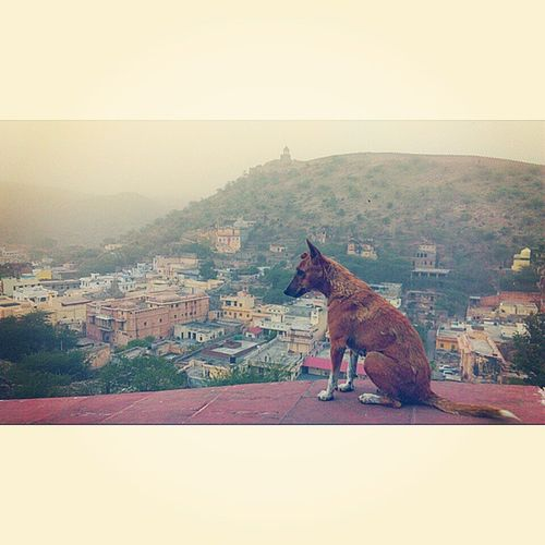 Breaking Sun Architecture DogLove Dog Amber Amer Jaipur Design Desert Top TopAngle Rajasthan India India_gram Ashesoftime Fort City Cityscape Pinkcity Air Instagram Instadaily Incredibleindia Insta Instant Instagood india_gram pictraveler postman