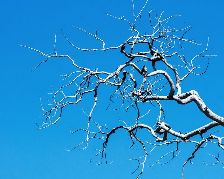 Blue Close-up No People Outdoors Day Dead Tree Tree Branches Tree Branches Against The Sky Beauty In Nature Tree Bare Tree Nature Sky