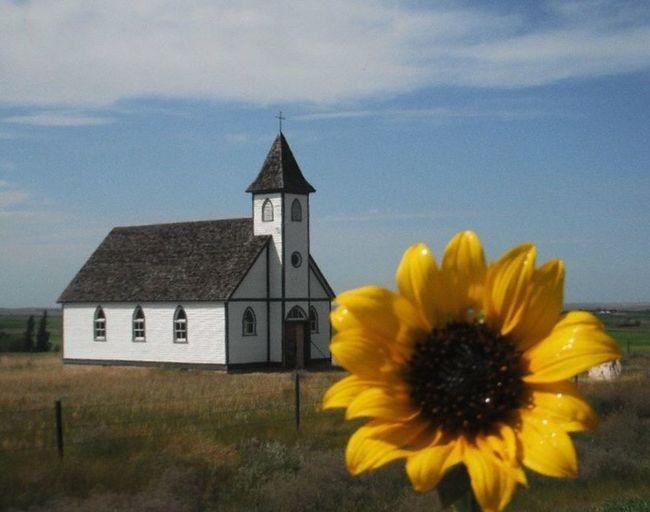 Stonehenge, Saskatchewan Church Country Sunflower Yellow Quaint  Country Church Summer Blue Sky