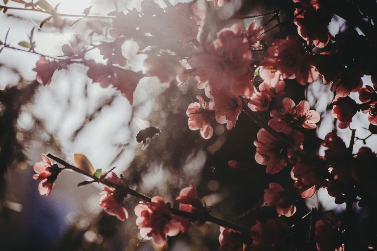 spring Flower Flower Head Tree Branch Blossom Close-up Plant Life Cherry Blossom