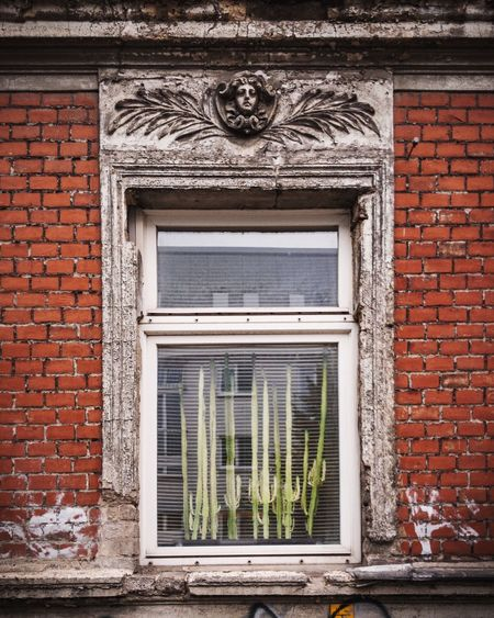 Window Brick Wall Window Building Exterior Architecture Built Structure No People Door Day House Outdoors Close-up Berlin Cacti