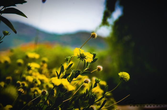 Nature Plant Outdoors No People Day Growth Green Color Beauty In Nature Close-up Rural Scene Flower Freshness Animal Themes Sky Beauty Beauty In Nature Low Angle View EyeEm Selects Nature Perfection