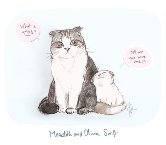 Taylor Swift Cats Meredith Olivia