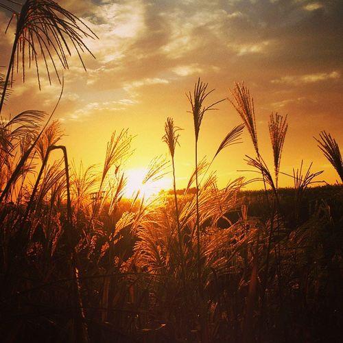 갈대 하늘공원 억새축제 서울 마포구 노을 Grass HaneulPark Seoul 2014sia Seoulite Sunset Eveningglow